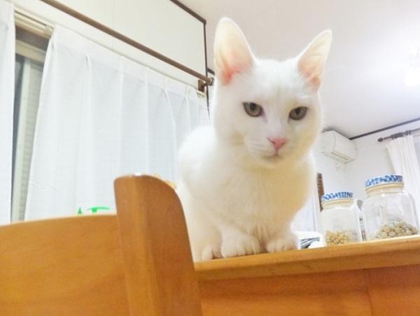 shirosenpai6