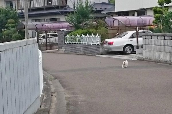 22no_shiromikemama20150718_1