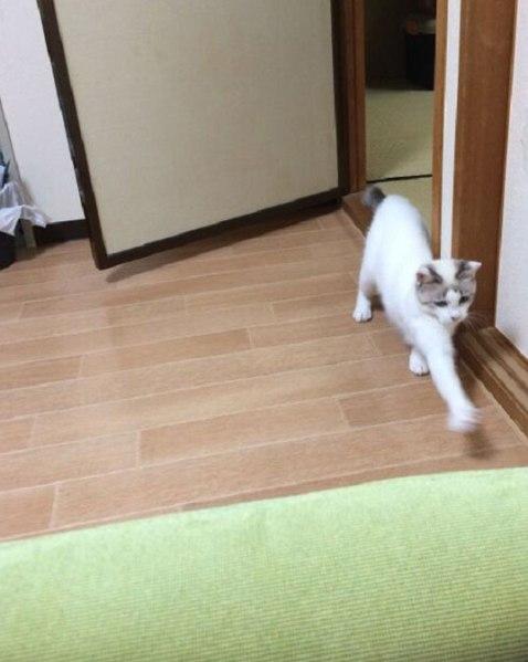 chimaki201506_5
