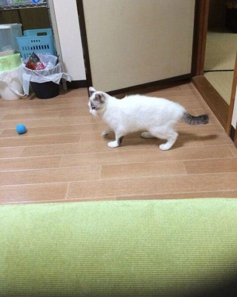 chimaki201506_6