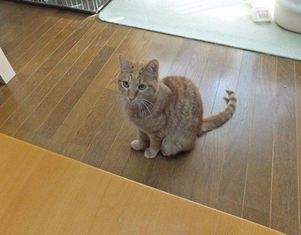 tsukune20151112_1