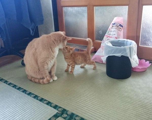 arashi_march20160512_1