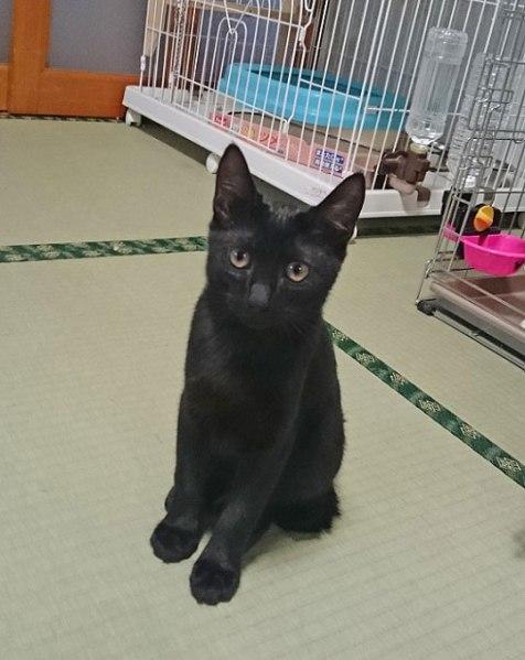 takezo20160926_1