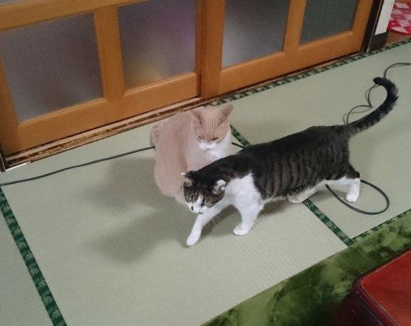 arashi_tsubaki20161115_1